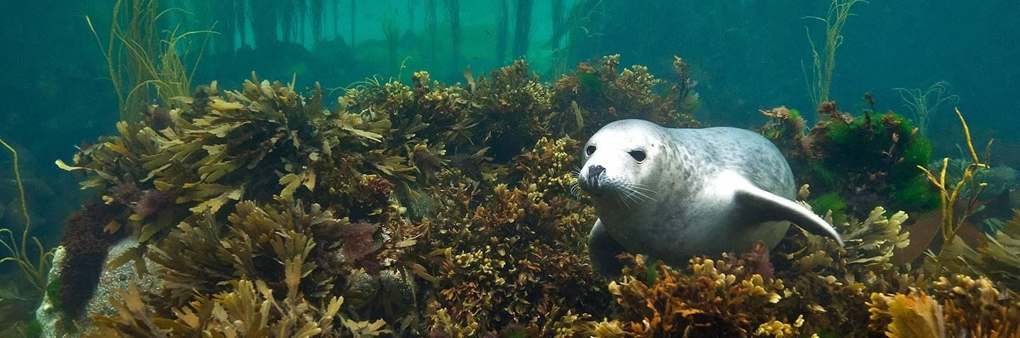 Umetnost podvodne fotografije - povratak u svet tišine